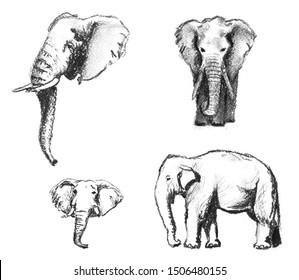 Set of the charcoal elephants