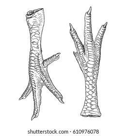 Set of chicken, rooster, turkey feet. Hand drawing engraving style. Domestic farm bird or hen legs for cooking.