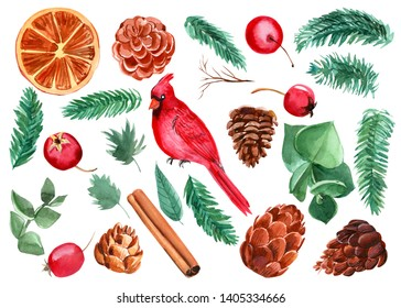 set of christmas elements for design on white isolated background, bird red cardinal, fir and pine branch, pine cones, dried orange, cinnamon stick, hawthorn berries