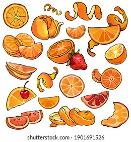 Set of citrus, oranges, tangerines and mandarines. Whole fruits and pieces. Tasty and healthy vegetarian food. Collection of stock illustrarions. Hand drawn, colorful, isolated.