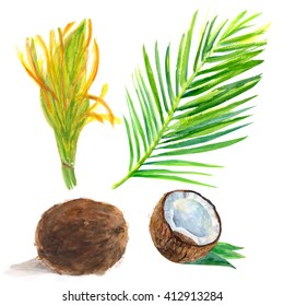set of coconuts with flower and leaf on a white background, watercolor painting