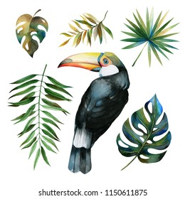 A set of collected from tropical leaves and a bird toucan.