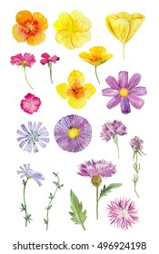 Set collection arrangement poster of hand painted drawn watercolor cliparts of yellow and violet wild flowers