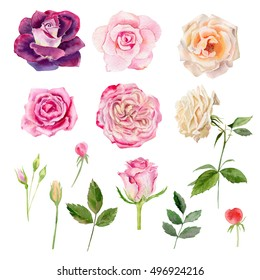 Set collection arrangement poster of hand painted drawn watercolor cliparts of roses