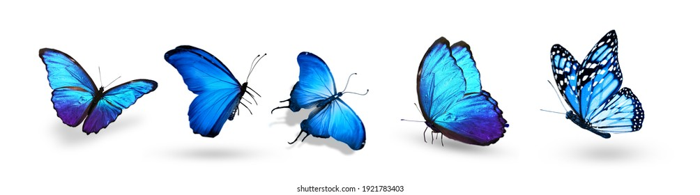 Set of color tropical butterflies, isolated on the white background