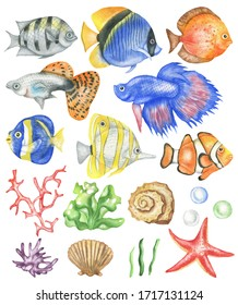 Set of colored fish and corals, seashells, algae. Isolated elements on a white background. Watercolor hand drawing.