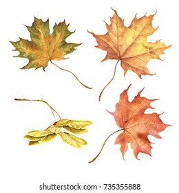 Set of colorful autumn leaves. Watercolor illustration