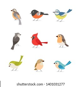 Set of colorful birds isolated on white background