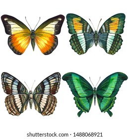 Set of colorful butterflys on an isolated white background, watercolor illustration, hand drawing, painting