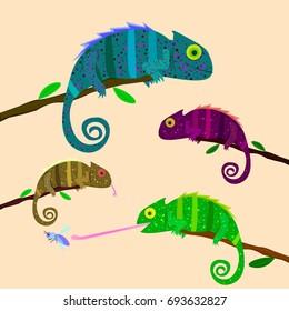 Set of colorful chameleons sitting on the branch on light background.