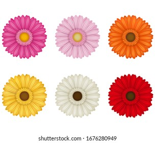 set of colorful gerberas flowers on white background