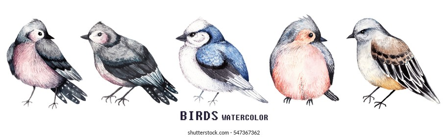 Set of colorful watercolors birds isolated on white background, natural illustration, watercolor birds collection
