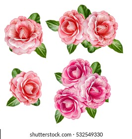 Set. The composition, a bouquet of flowers. pink, orange, pastel camellia, green leaves. Isolated on white background.