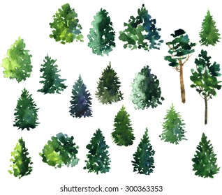 set of conifer trees drawing by watercolor, artistic painting  illustration,hand drawn forest