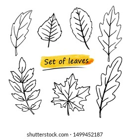 Set of contour leaves isolated on white background. Hand-drawn. Collection for your design.