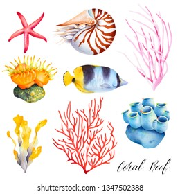 Set of coral reef animals. Sea sponge, anemone,nautilus, butterfly fish, starfish. Isolated watercolor illustration.