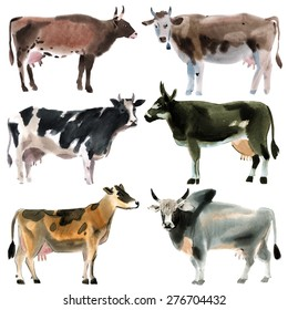 Set of cows. Watercolor illustration in white background.