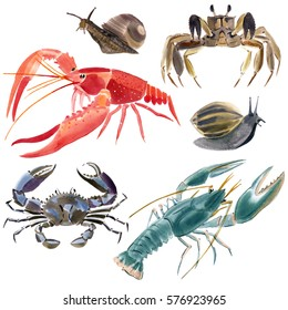 Set of crustaceans. Watercolor illustration in white background.