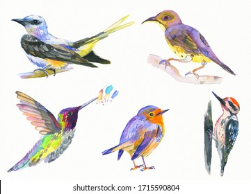 Set of cute birds. Watercolor hand painted illustration on white background.