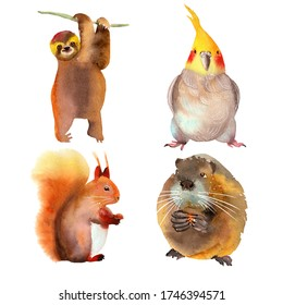 Set of cute funny animals. Muskrat, squirrel, parrot, sloth. Watercolor illustrations isolated on a white background