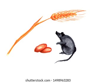Set of cute little mouse or rat with spikelet and nuts. Watercolor isolated illustration.