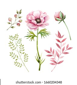 Set of decorative illustrations of flowers and plants on a white background. pink flowers anemones and plants berries and buds, watercolor illustration