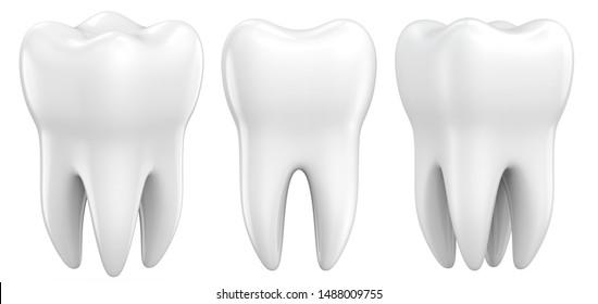 Set of dental premolar teeth 3d models as a concept of dental examination teeth, dental health and hygiene. 3d rendering illustration isolated on white background