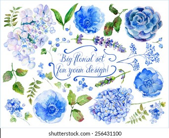 Set of different blue, cyan hydrangea, lavender, currant for design. Watercolor flowers, leaves. Floral elements to create compositions.