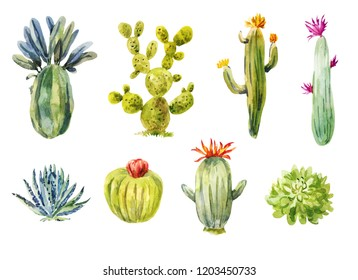 Set of different cacti. Watercolor illustration isolated on white. Blossom succulents