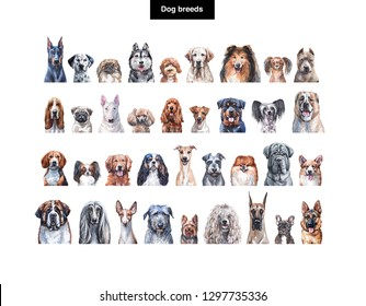Set of dog breed images