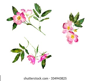set of dog (wild) rose flowers, hand-drawn watercolor illustration