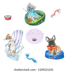 Set Dogs of different breeds.  Hand painting . color pencil. For veterinary use, postcards and fabric prints.