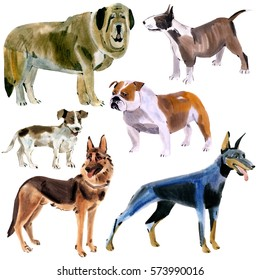 Set of dogs. Watercolor illustration in white background.