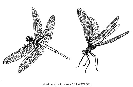 Set dragonfly graphic illustration isolation hand draw.