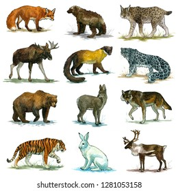Set of and drawn watercolor illustrations with a russian wild animals.