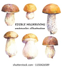 Set of edible mushrooms - birch bolete and porcini. Watercolor hand drawn illustration.
