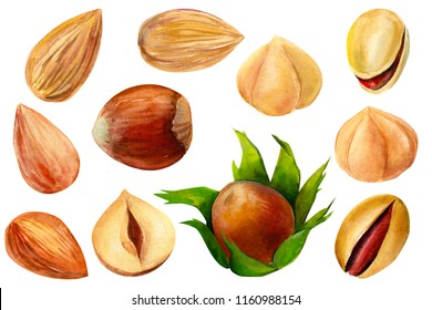 Set of elements on isolated white background, watercolor illustration, hand drawing. Nuts, almonds, hazelnuts, pistachios.