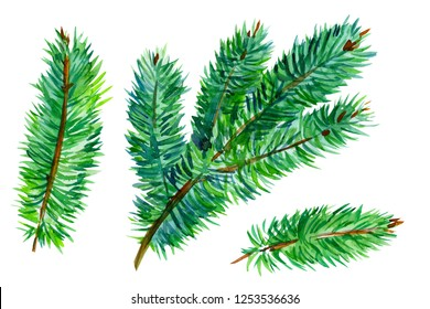 set of elements on an isolated white background, spruce branches, christmas tree, watercolor illustration, hand-drawing