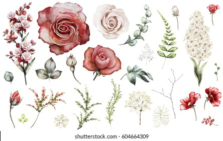 Set elements of red rose, hyacinth. Collection garden and wild flowers, branches, illustration isolated on white background, eucalyptus, bud, exotic leaf, herbs. Watercolor style