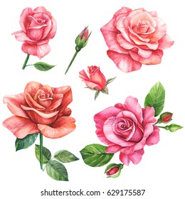 Set of elements, roses greeting card watercolor