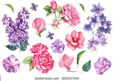set of elements of summer flowers, celebration, lilac, bells, rose and magnolia, watercolor drawing