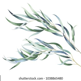 Set of eucalyptus branches isolated on white background. Watercolor hand drawn illustration.