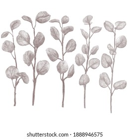 Set of Eucalyptus Branches with Leaves Hand Sketched Pencil Illustration, Sepia, Isolated