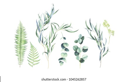 Set of eucalyptus & fern branches isolated on white background. Watercolor hand drawn illustration.