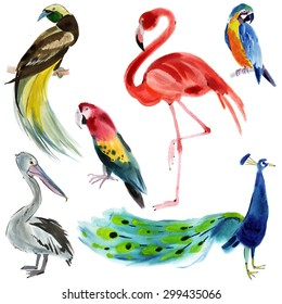 Set of exotic birds. Watercolor illustration in white background.