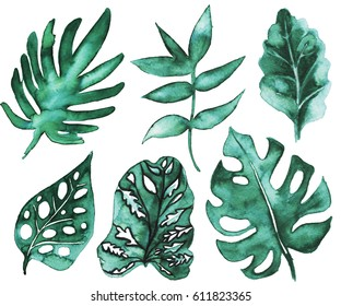 Set with exotic hand drawn watercolor leaves.
