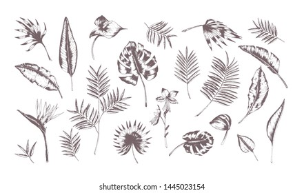Set of exotic leaves of different plants hand drawn with contour lines on white background. Collection of tropical foliage of various size and shape. Monochrome realistic illustration.
