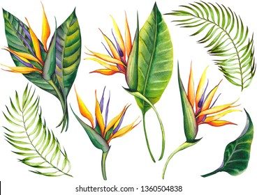 Set of exotic strelitzia flowers, bird of paradise. Watercolor on white background. Isolated elements for design.