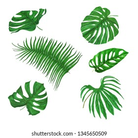 Set of exotic tropical green leaves isolated on white background. Watercolor hand drawn illustration.