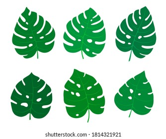 Set of exotic tropical leaves. Monstera Deliciosa plant. Isolated on white background. Flat style. Hand drawn elements for cards, posters, flyers, stickers, textile, invitations, web design.